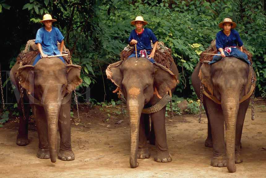 Trainers demonstrate the use of elephants for moving logs, at Mae Sa Elephant Camp near Chaing Mai, Thailand