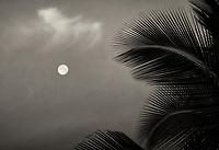 Full moon and palm tree at sunrise. Hawaii, The Big Island