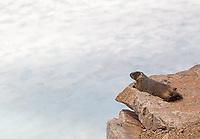 A marmot sunbathes above a frozen lake.