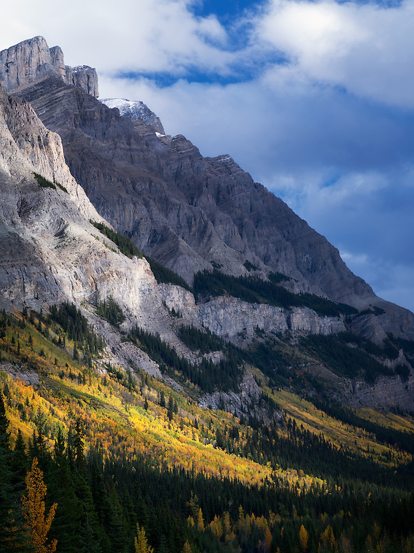 Mountainside with fall colored aspen trees. Banff National Park, Alberta, Canada