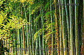 Tom Mackie, LANDSCAPES, LANDSCHAFTEN, PAISAJES, photos,+Adashino Nembutsu-ji Temple, Asia, Japan, Japanese, Kyoto, Tom Mackie, Worldwide, bamboo, environment, environmental, forest,+green, horizontal, horizontals, nobody, pattern, patterns, woodland, world wide, world-wide,Adashino Nembutsu-ji Temple, Asi+a, Japan, Japanese, Kyoto, Tom Mackie, Worldwide, bamboo, environment, environmental, forest, green, horizontal, horizontals,+nobody, pattern, patterns, woodland, world wide, world-wide+,GBTM190653-1,#l#, EVERYDAY