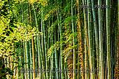 Tom Mackie, LANDSCAPES, LANDSCHAFTEN, PAISAJES, photos,+Adashino Nembutsu-ji Temple, Asia, Japan, Japanese, Kyoto, Tom Mackie, Worldwide, bamboo, environment, environmental, forest,+green, horizontal, horizontals, nobody, pattern, patterns, woodland, world wide, world-wide,Adashino Nembutsu-ji Temple, Asi+a, Japan, Japanese, Kyoto, Tom Mackie, Worldwide, bamboo, environment, environmental, forest, green, horizontal, horizontals,+nobody, pattern, patterns, woodland, world wide, world-wide+,GBTM190653-1,#l#, EVERYDAY