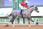 February 19, 2021: MORTAJEH #7 ridden by Mike Smith wins the INTERNATIONAL JOCKEYS CHALLENGE SPONSORED BY stc dare on International Jockeys Challenge Day, King Abdulkaziz Racecourse, Riyadh, Saudi Arabia. Shamela Hanley/Eclipse Sportswire