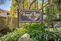 Peacock Ridge