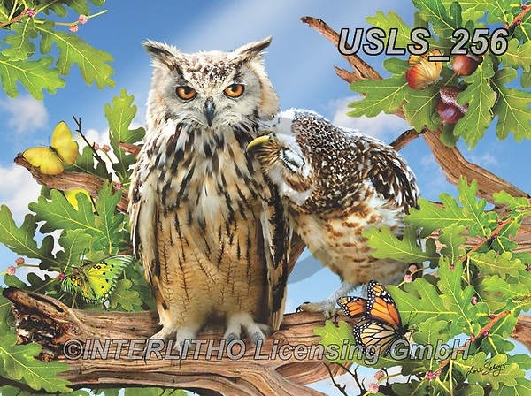 Lori, REALISTIC ANIMALS, REALISTISCHE TIERE, ANIMALES REALISTICOS, zeich, paintings+++++Owl Always Love You_sm_12in_72_Sunsout,USLS256,#a#, EVERYDAY ,puzzle,puzzles