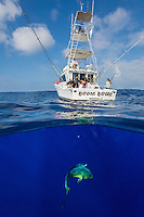 Tourists catching a mahimahi from fishing charter boat Boom Boom between Moloka'i and O'ahu.