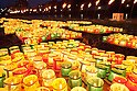 LIGHT UP NIPPON - Prayer for the Disaster Victims