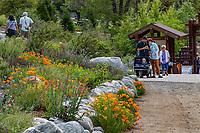 Viistors along entry path with spring wildflowers; Southern California Montane Botanic Garden; The Wildlands Conservancy Oak Glen Preserve