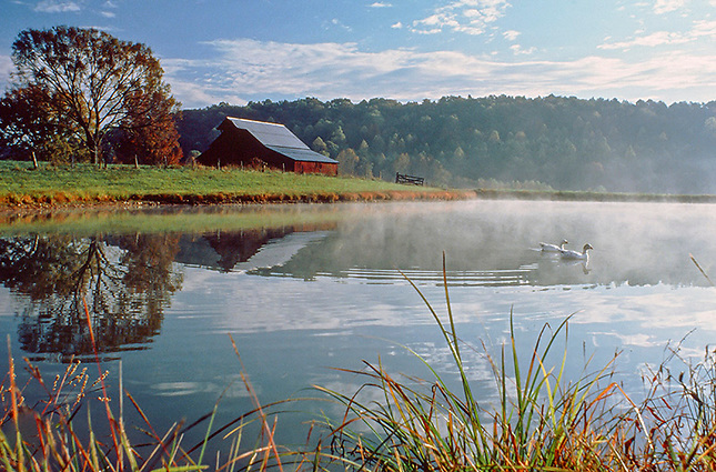 Early morning of farm with ducks on pond