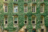 Ivy covered information building, Princeton University, New Jersey, USA