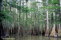 BS06-006z  Louisiana Swamp, cypress trees, Atchafalaya Swamp
