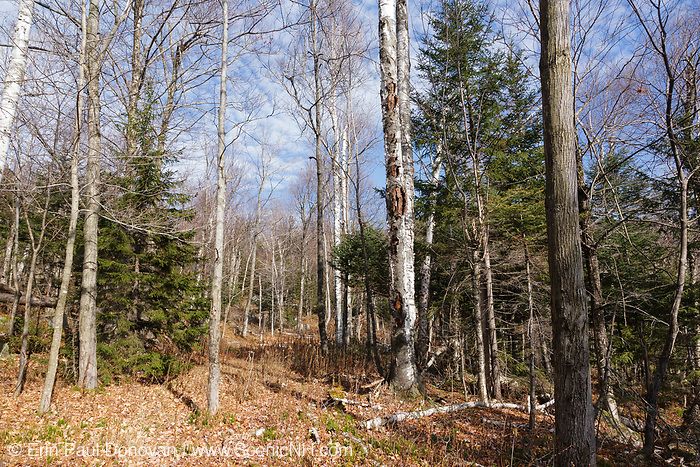 The old railroad bed of the Beebe River Railroad (1917-1942), near logging Camp 12, in Waterville Valley, New Hampshire. This railroad was a logging railroad roughly a 25-miles long in the towns of Campton, Sandwich, and Waterville.