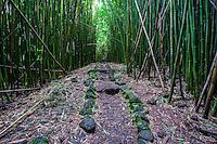 Rocks line the Pipiwai hiking trail through a thick forest of bamboo, Haleakala National Park, Kipahulu, Maui.