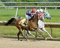 Kentucky Horse Park Arabian Galleries