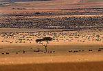 Wildebeest herds on the vast plains of the Masai Mara National Reserve, Kenya