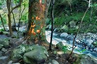 Iao River. Iao Valley State Monument. Maui, Hawaii