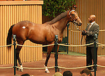 13 September 2010.  Hip #127 Bernardini - Casual Look colt sold for $425,000 at the Keeneland September Yearling Sale.  Consigned by Lane's End.