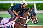 LOUISVILLE, KY - MAY 02: Paola Queen, trained by Gustavo Delgado, exercises and prepares during morning workouts for the Kentucky Derby and Kentucky Oaks at Churchill Downs on May 2, 2016 in Louisville, Kentucky. (photo by John Voorhees/Eclipse Sportswire/Getty Images)
