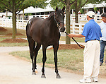 11 September 2010.  Hip #51  Giant's Causeway - Ipi Tombe (ZIM) colt, consigned by Denali.