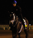October 25, 2015:  Got Lucky (outside), trained by Todd Pletcher, and owned by Hill 'n' Dale Equine Holdings, and Philip Steinberg, is entered in the Breeder's Cup Longines Distaff Grade 1 $2,000,000.  Candice Chavez/ESW/CSM