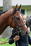 October 01, 2017, Chantilly, FRANCE -  Polydream at the Total Prix Marcel Boussac (Gr. I) at  Chantilly Race Course  [Copyright (c) Sandra Scherning/Eclipse Sportswire)]