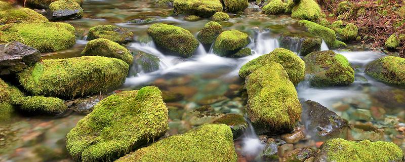 Bridge over small creek with mossy rocks. Opal Creek Scenic Recreation Area, Oregon