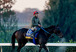 October 31, 2020: Ollie'S Candy, trained by trainer John W. Sadler, exercises in preparation for the Breeders' Cup Distaff at Keeneland Racetrack in Lexington, Kentucky on October 31, 2020. Scott Serio/Eclipse Sportswire/Breeders Cup/CSM