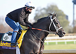 November 5, 2020: Title Ready, trained by trainer Dallas Stewart, exercises in preparation for the Breeders' Cup Classic at Keeneland Racetrack in Lexington, Kentucky on November 5, 2020. Jessica Morgan/Eclipse Sportswire/Breeders Cup