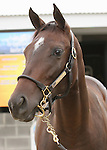 11 September 2010.  Hip #108  Storm Cat - Western Princess filly, consigned by Denali.   One of the last three offspring by pensioned sire, Storm Cat.