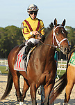 January 31, 2015: Ocean Knight with Irad Ortiz, Jr. win the 35th running of the  Grade 3 Sam F. Davis Stakes for 3-year olds, going 1 1/16 mile at Tampa Bay Downs. Trainer: Kiaran McLaughlin . Owner:  Stonestreet Stables. Sue Kawczynski/ESW/CSM