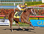 07 February 2010:  Taconic Victory with jockey Jose Lezcano wins the Seventh race at Gulfstream Park in Hallandale Beach, FL.