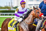 HALLANDALE BEACH, FLORIDA - APRIL 2:  Nyquist #4, ridden by Jockey Mario Gutierrez, looking very comfortable and confident, on post parade prior to the race, in which he won the Florida Derby at Gulfstream Park on April 2, 2016 in Hallandale Beach, Florida (photo by Douglas DeFelice/Eclipse Sportswire/Getty Images)