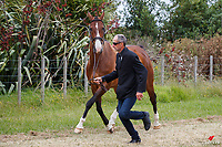 NZL-Iain Alexander presents Mr Dee during the 1st Horse Inspection for the SsangYong CCI 2*-L. 2020 NZL-Puhinui International Three Day Event. Puhinui Reserve. Auckland. Thursday 10 December. Copyright Photo: Libby Law Photography