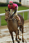 HOT SPRINGS, AR - JANUARY 16: Joseph Rocco, Jr. aboard Sea Aveta (8) in the sloppy conditons after the 5th race on Martin Luther King Day at Oaklawn Park on January 16, 2017 in Hot Springs, Arkansas. (Photo by Justin Manning/Elipse Sportwire/Getty Images)