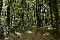 FOREST_LOCATION_90092