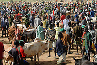 "Afrika Uganda Karamoja , Karimojong und ihre Tiere auf dem Viehmarkt von Kotido -  Nomaden Halbnomaden ethnische Gruppe Afrikaner Indigene Voelker afrikanisch xagndaz | .Africa Uganda Karamoja , Karimojong a pastoral tribe with their cattle at cattle market in Kotido  -  indigenous people  .| [ copyright (c) Joerg Boethling / agenda , Veroeffentlichung nur gegen Honorar und Belegexemplar an / publication only with royalties and copy to:  agenda PG   Rothestr. 66   Germany D-22765 Hamburg   ph. ++49 40 391 907 14   e-mail: boethling@agenda-fototext.de   www.agenda-fototext.de   Bank: Hamburger Sparkasse  BLZ 200 505 50  Kto. 1281 120 178   IBAN: DE96 2005 0550 1281 1201 78   BIC: ""HASPDEHH"" ,  WEITERE MOTIVE ZU DIESEM THEMA SIND VORHANDEN!! MORE PICTURES ON THIS SUBJECT AVAILABLE!! ] [#0,26,121#]"