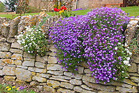 Spring garden vertical planting in nooks and crannies in stone wall near house