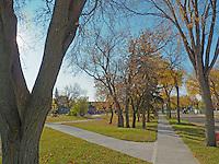 The colors of fall in Edmonton Alberta Canada.