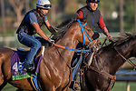 OCT 29 2014:Obviously, trained by Philip D'Amato, exercises in preparation for the Breeders' Cup Mile at Santa Anita Race Course in Arcadia, California on October 29, 2014. Kazushi Ishida/ESW/CSM