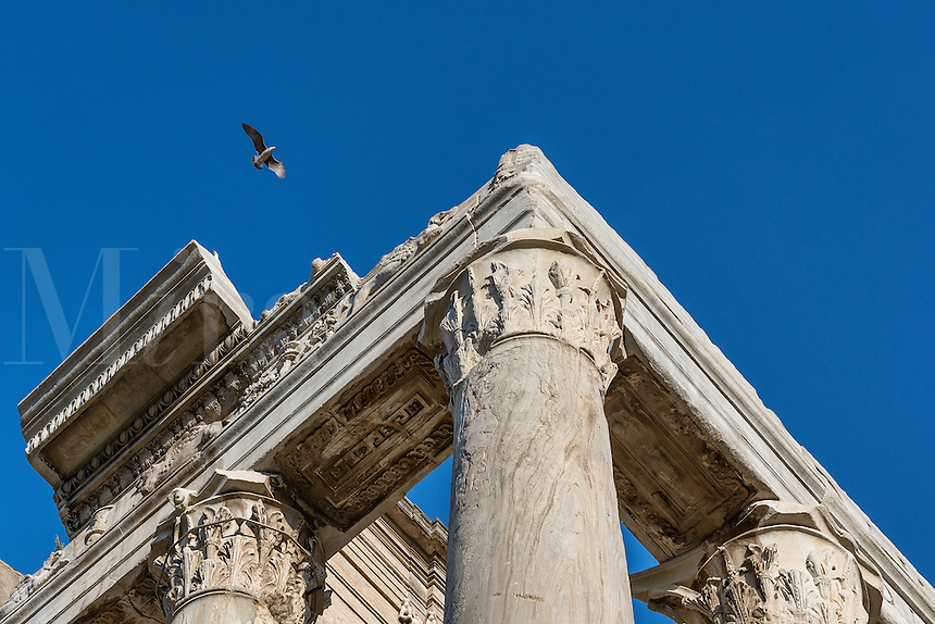 Corinthian column detail, Temple of Antoninus & Faustina, Roman Forum, Rome, Italy