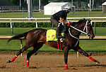 LOUISVILLE, KY - MAY 02:  Majesto (Tiznow x Unacloud, by Unaccounted For) gallops at Churchill Downs in preparation for the Kentucky Derby. Owner Grupo 7C Racing Stable, trainer Gustavo Delgado.(Photo by Mary M. Meek/Eclipse Sportswire/Getty Images)