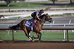 OCT 27 2014:Souper Colossal, trained by Eddie Plesa, exercises in preparation for the Breeders' Cup Juvenile at Santa Anita Race Course in Arcadia, California on October 27, 2014. Kazushi Ishida/ESW/CSM