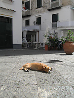 Dog Days - Amalfi