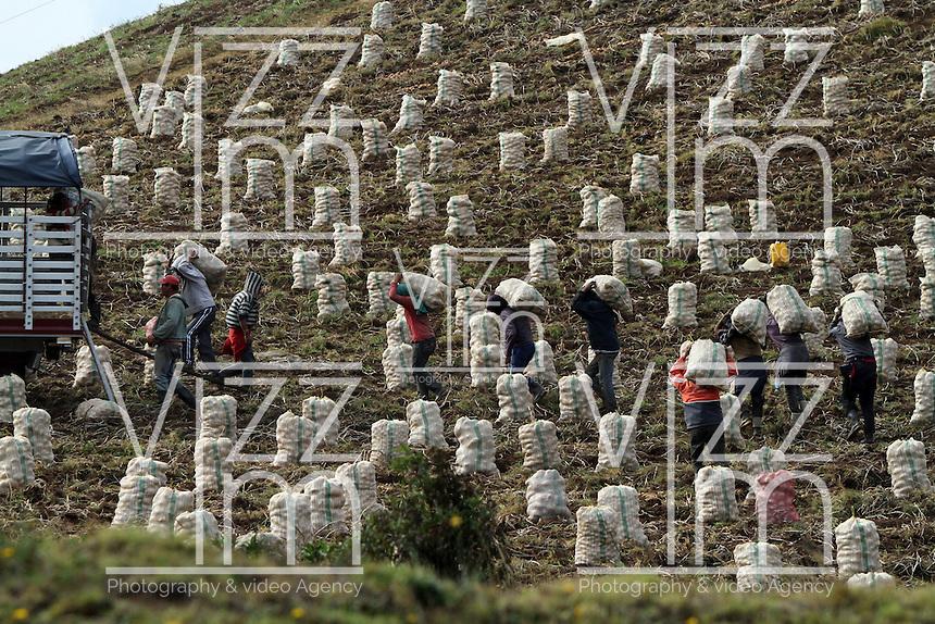 ALTO DEL SISGA -COLOMBIA. 17-02-2014. Recolección de papa. Potato harvest. Photo: VizzorImage/ Felipe Caicedo / Staff