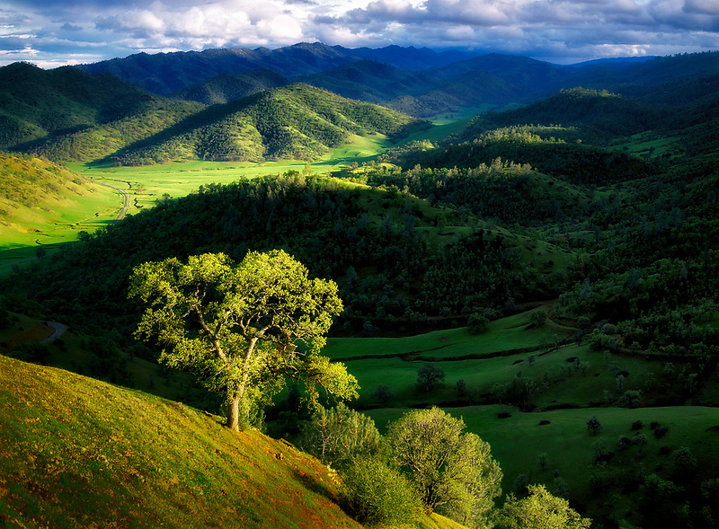 Hills near Bear Valley. Colusa County, California