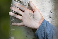 Betulin, Hand weiß gefärbt vom Reiben auf dem Stamm einer Birke, Birke, Hänge-Birke, Sand-Birke, Hängebirke, Sandbirke, Weißbirke, Stamm, Rinde, Birkenrinde, Betula pendula, European White Birch, Silver Birch, warty birch, birch, rind, bark, Le bouleau verruqueux, bouleau blanc