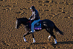 November 3, 2020: Girl Daddy, trained by trainer Dale L. Romans, exercises in preparation for the Breeders' Cup Juvenile Fillies at Keeneland Racetrack in Lexington, Kentucky on November 3, 2020. John Voorhees/Eclipse Sportswire/Breeders Cup/CSM