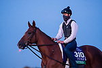 November 5, 2020: United, trained by trainer Richard E. Mandella, walks on the track during morning workouts at Keeneland Racetrack in Lexington, Kentucky on November 5, 2020. Scott Serio/Eclipse Sportswire/Breeders Cup/CSM