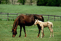Mother and foal in green pasture