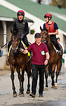 LOUISVILLE, KY - MAY 03: Mendelssohn with  Dean Gallagher is lead back to the quarantine barn by Pat Keating  at Churchill Downs on May 3, 2018 in Louisville, Kentucky. (Photo by Alex Evers/Eclipse Sportswire/Getty Images)